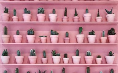 Turns Out, Your Indoor Plant Obsession Is As Good As Going To The Gym