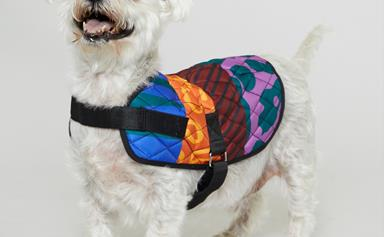 Fashion Brand Gorman Teams Up With PetRescue To Create Limited Edition Coats For Your Doggo