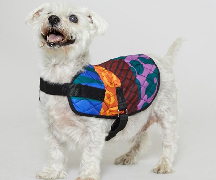 Gorman x Guide Dogs Australia