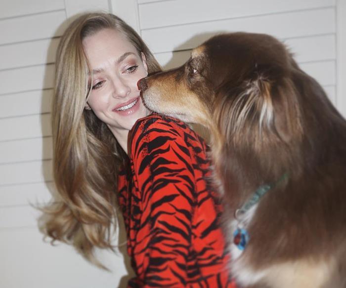 Dogs humans stress study