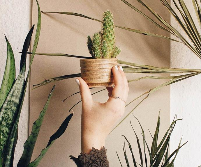 Filling Your House With Plants Boosts Your Happiness And Life Expectancy, Study Says