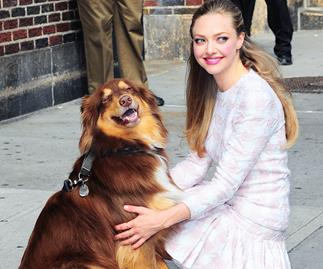 Amanda Seyfried and her dog.