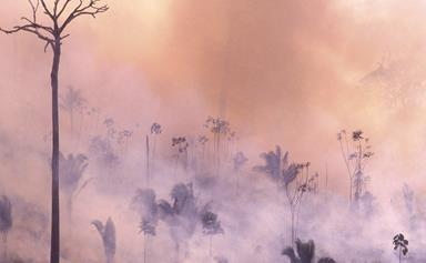 5 Ways You Can Help Save The Amazon From The Forest Fires In Brazil