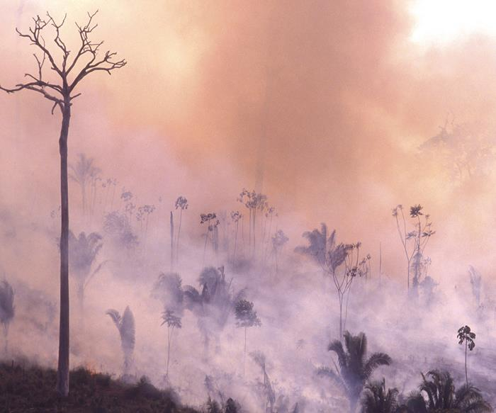 The Amazon Forest in Brazil, burning in a fire.