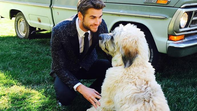 Liam Hemsworth with his dog.