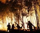 5 Ways You Can Help The Victims Of The Queensland And New South Wales Bushfires