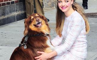 Amanda Seyfried and her dog.