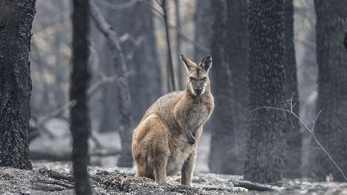 Bushfires Australia.