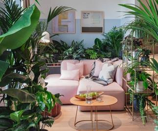 The Jungle Collective virtual pop-up plant sales in Australia in May 2020.
