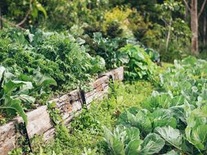 Easy ways to reduce your food waste by composting at home