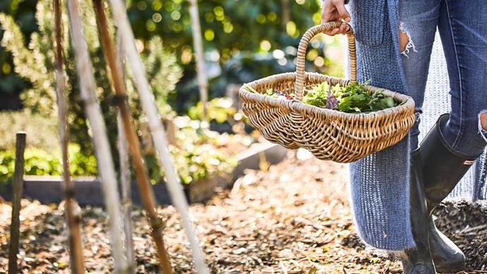 girl in vegetable garden with basket