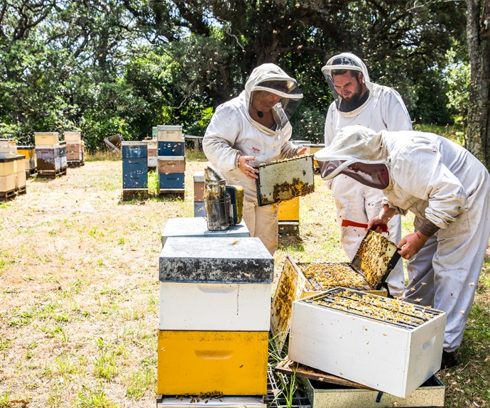 How the family behind Earthbound Honey turned their beekeeping passion into a business