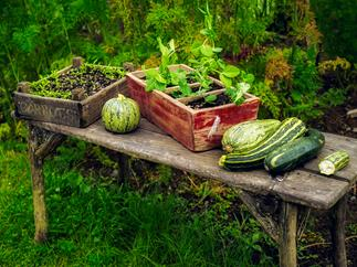garden table with winter vegetables