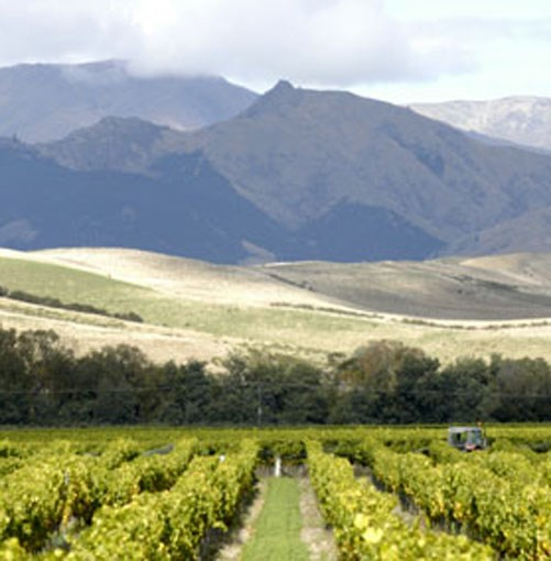 **** Marlborough  Strap yourself in for an epic journey across the North and South Islands, through three wine regions and into some of the country's most exciting cellar doors. This 10-day tour from Hawkes Bay to Marlborough is only a taste of what to expect on the 380-kilometre trail - the rest is up to you.  [click here for the article](http://www.gourmettraveller.com.au/the_classic_new_zealand_wine_trail_marlborough.htm)