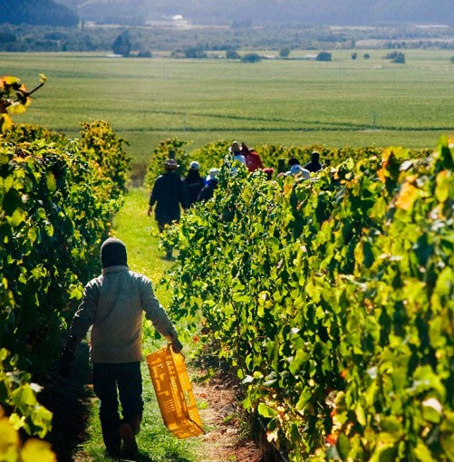 **** Sommeliers' guide to New Zealand  Three top Aussie sommeliers hit the road to explore New Zealand's finest wine regions, sampling intriguing drops and meeting the country's leading winemakers along the way.  [click here for the article](http://www.gourmettraveller.com.au/sommeliers-guide-to-new-zealand.htm)