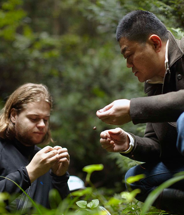 """**** """"Is it poisonous? I'm not sure - why don't you try it?"""" Magnus Nilsson and Yoshihiro Narisawa comparing field notes in the Ishikawa hills."""