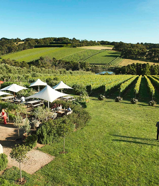 **Montalto Vineyard and Olive Grove, Vic** Best Wine Tourism Experience: Montalto Vineyard and Olive Grove, Vic   Runner-up: Port Phillip Estate, Vic   John & Wendy Mitchell's Mediterranean-accented vineyard experience on Victoria's Mornington Peninsula elevates the pleasures of grape and table to a fine art. In the handsome timber and glass dining room, chef Barry Davis makes the most of the property's thriving kitchen garden and orchard to create accomplished, delicious meals with side serves of rolling hills and ocean glimpses. Casual summer dining on pizzas and cheese plates at the outdoor Piazza and Garden Café ensures Montalto's mass appeal. Fine homegrown wines are grouped under the vineyard's Pennon Hill and reserve Montalto labels but the restaurant's exciting list of vine varieties ranges right across the peninsula, the nation and the world. Food and wine aside, the estate's sculpture collection seems a natural fit for its picturesque hillside location and refined aesthetic. www.montalto.com.au