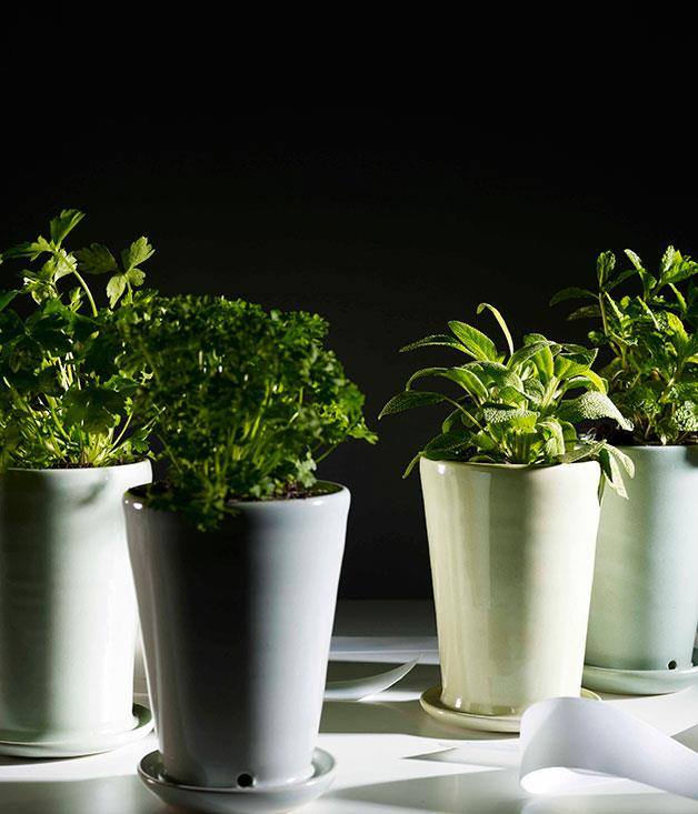 **Bison's pots** FOR A HERBACEOUS FRIEND      Handmade in Bison's Canberra studio, these pretty pots with built-in saucers spell instant kitchen garden – backyard or no backyard. Herb pots, $29.50 each, [**Bison Australia**](http://www.bisonhome.com).