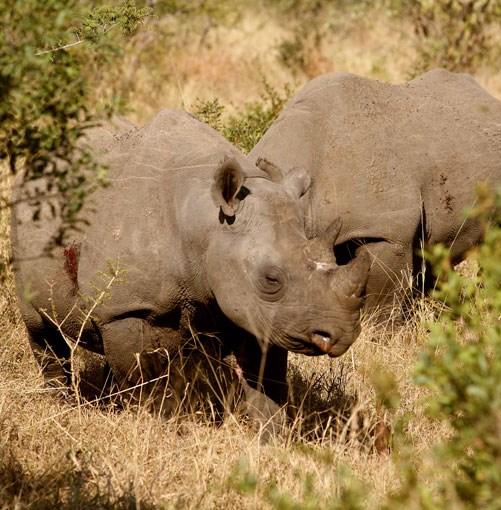 **Kruger National Park** Kruger National Park