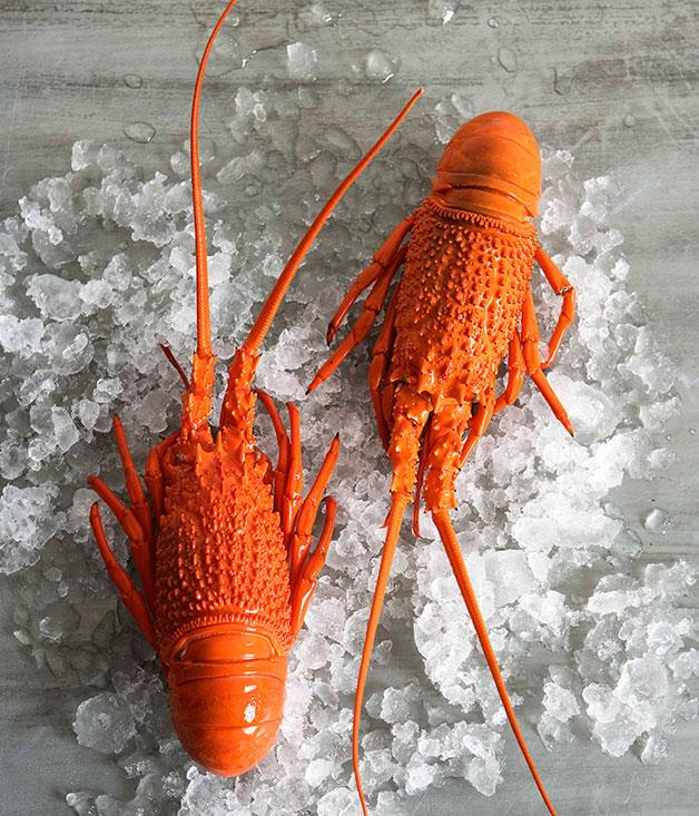"**[How to prepare a fresh lobster](https://www.gourmettraveller.com.au/recipes/browse-all/preparing-a-fresh-lobster-14076|target=""_blank"")**"