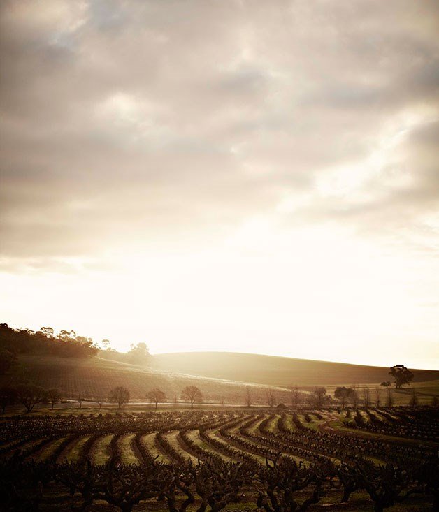 "**Best Wine Tourism** Winner: Barossa Valley, SA   Runner-up: Hunter Valley, NSW   Recipe for a great wine region: take seven generations of European settlers, mix together their distinctive cultures, season with a shared passion for viniculture, and roll them out over a sweep of painterly landscapes. The Barossa might be best known for producing some of the finest shiraz on the planet, but it is one of Australia's most diverse (and enchanting) food and wine regions. [barossa.com](http://barossa.com ""Barossa Valley"")"
