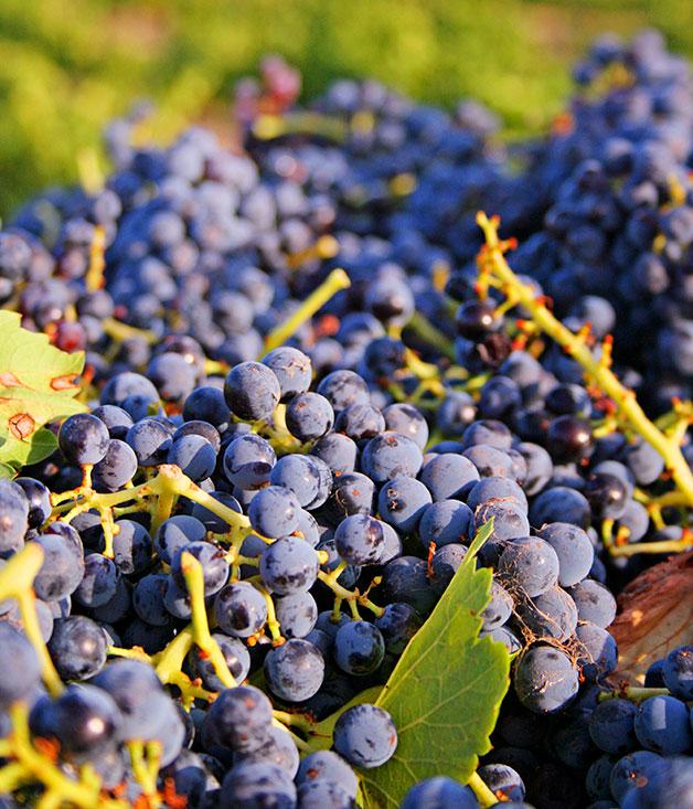 Barossa and Eden Valley wine drive | Gourmet Traveller ...