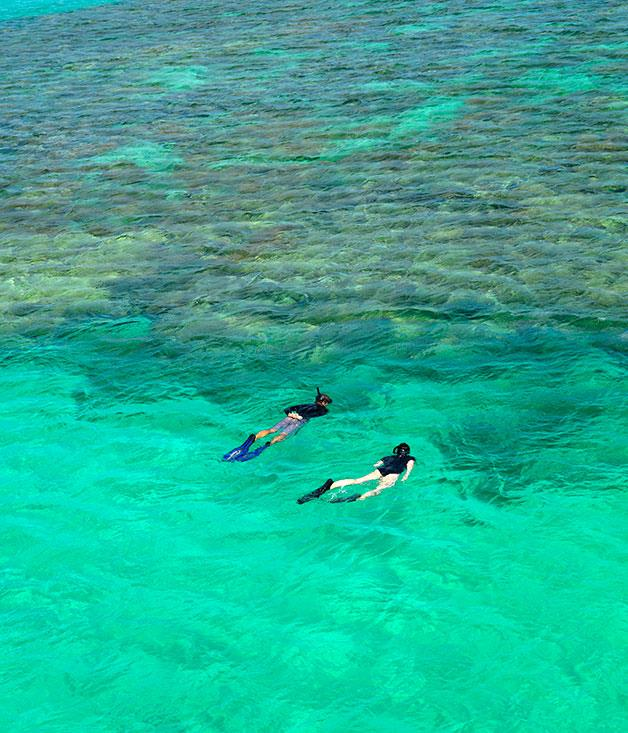**** Snorkelling over the giant clam garden