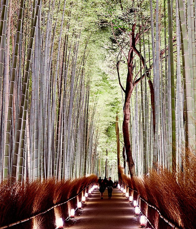 **** The bamboo forest of Arashiyama.
