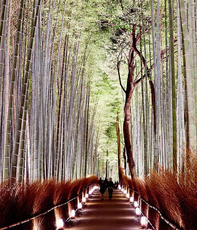 **** The bamboo forest of Arashiyama.