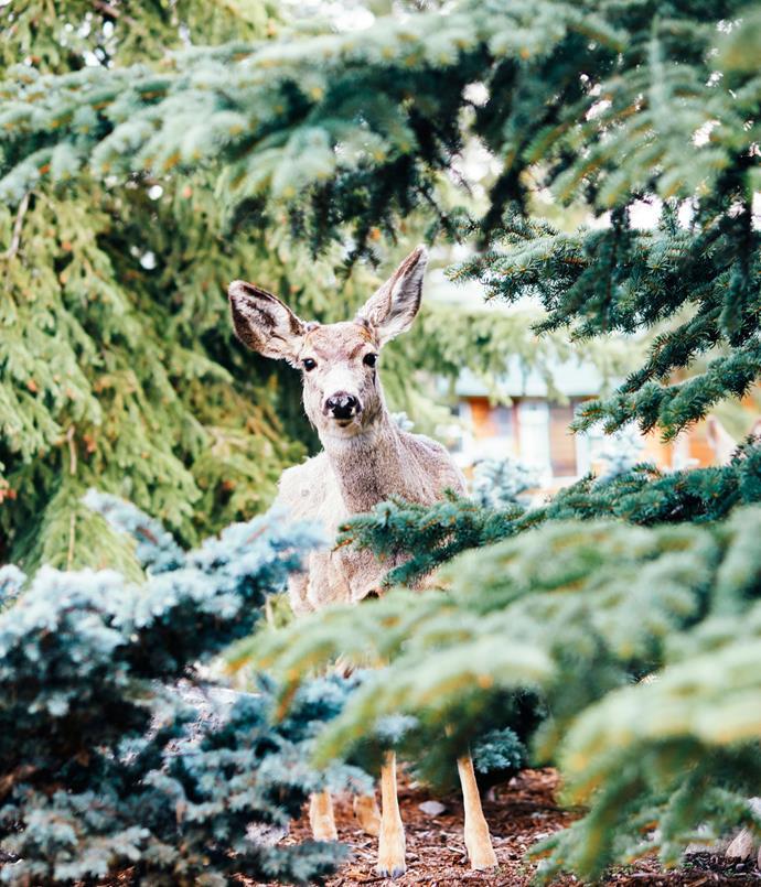 **Deer spotted in Jasper**