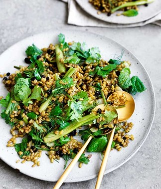 Finger fennel with farro and curry dressing
