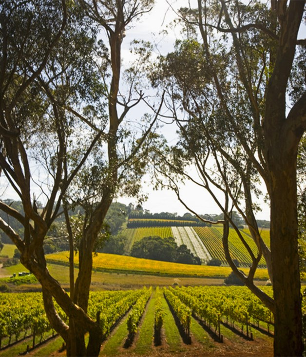 **WALK: The Barossa Camino** This seven-kilometre walk, part of [Tasting Australia's 2016 program](/events/special-events/2016/2/tasting-australia-a-preview/), will have you navigating the beautiful vineyards of Mount Edelstone and Hill of Grace with winemakers and farmers from families who have lived and worked in the area since the 1800s. Taste the wines, then walk to the Bootmakers Cottage for lunch in true Barossa style.   _Tickets $195, 1 May, 8:30am, Town Square, Adelaide, SA, _ [tastingaustralia.com.au](file://acp.net/data/SYD/Mags/Gourmet&Wine/ED/Common/Website/SOPHIE/2016%20Features/March/Autumn%20events/tastingaustralia.com.au)