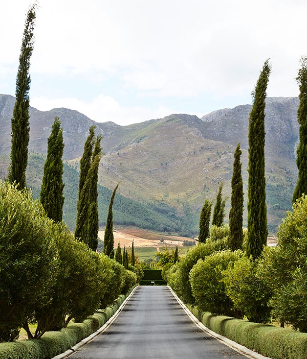 **Driveway** The driveway to Grande Provence Heritage Wine Estate.