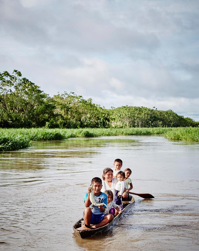 **Caiman on the Amazon** A local boy holds a caiman, a relative of the alligator, as he cruises the Amazon River.