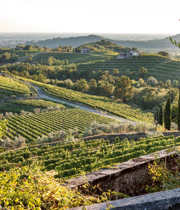 **Friuli's rolling vineyards at sunset** To celebrate the launch of The Space Between, which premiered at the 2016 Lavazza Italian Film Festival, festival sponsor Fiat cruised back to their Italian roots, collaborating with the film's director Ruth Borgobello. The journey saw Fiat visit the historic Friuli Venezia Giulia region in Italy, the setting of the film. Located just an hour's drive from Venice, the region boasts a richly diverse landscape that transverses the jagged Giulian Alps, the countryside peppered with vineyards and UNESCO-listed medieval towns Udine and Cividale.  All photography byMarco Covi.