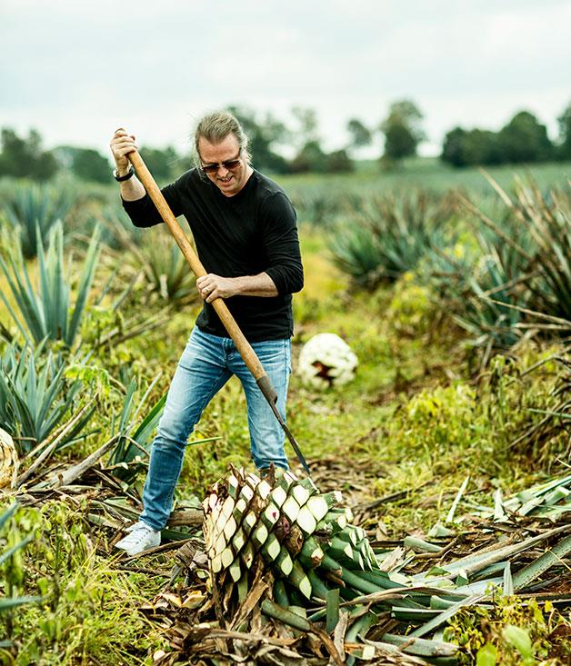 **Neil Perry swinging a coa in the agave fields**