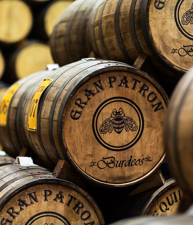 **Tequilas ageing in the barrel room**