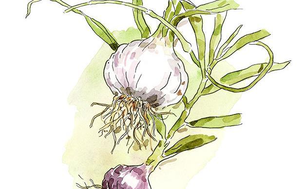Victoria's inaugural garlic festival