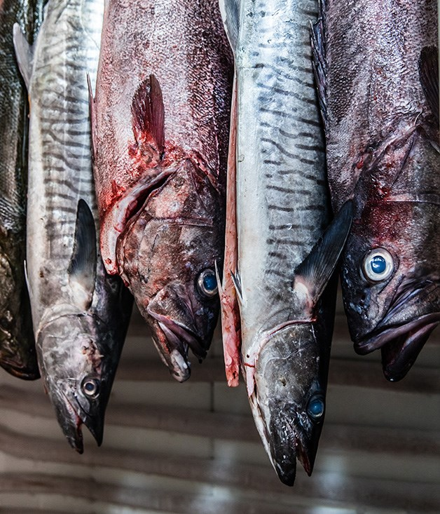 """**Dry-aged fish** Don't mention the """"F"""" word to fish-ageing proponent Josh Niland from Sydney's Saint Peter. """"We never push it to the point of fishiness,"""" the chef says. """"The aim of dry-ageing is to sum up what the fish actually tastes like."""" So wild kingfish aged for nine or 10 days might taste as though it had been dressed with lemon, say, while Spanish mackerel acquires complex, savoury mushroom-like notes. """"Dry-ageing produces significant changes to the fish's flavour and the way it acts in the pan,"""" Niland says. """"It's not a gimmick and it doesn't work on all fish - you can age mulloway for 15 or 16 days, for example, but it tastes a lot better on day two."""" Sokyo chef Chase Kojima, from Star City in Sydney, prefers wet-ageing to bring a fish to flavoursome ripeness, working with the likes of tuna, ocean trout and alfonsino. [saintpeter.com.au](http://www.saintpeter.com.au/), [star.com.au](https://www.star.com.au/)"""