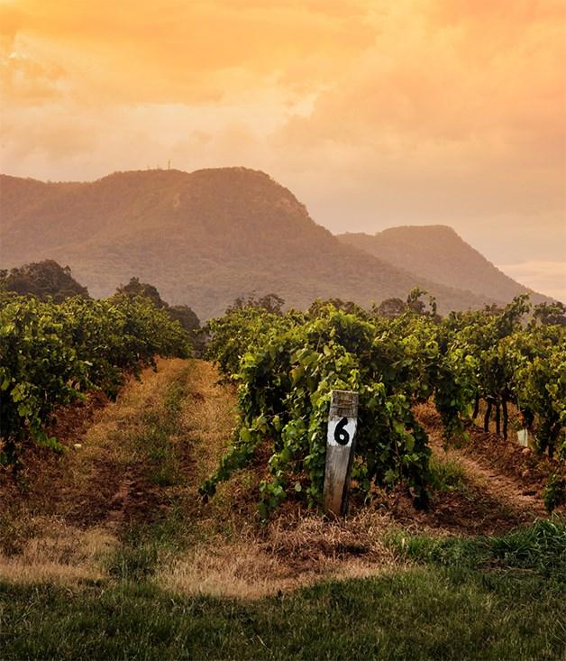 Tyrrell's Wines, Pokolbin