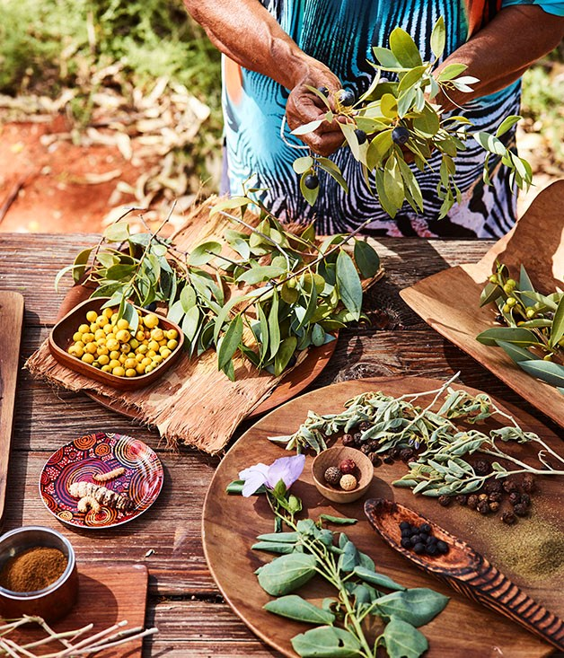 Bush Tucker Journeys at Uluru