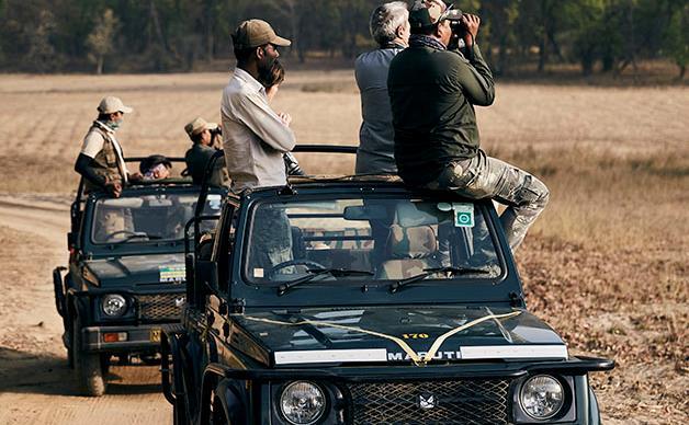 Chasing Bengal tigers in India's Madhya Pradesh