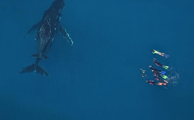 Swimming with humpbacks on the Ningaloo Coast