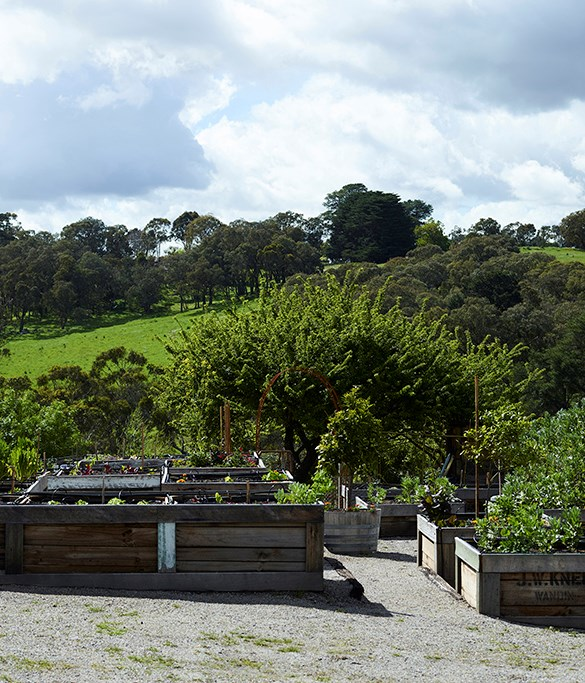 "**Fabian Capomolla** _[The Farm Yarra Valley](https://thefarmyarravalley.com.au/), Vic_  ""I live in a small house with a beachside garden. My name, Fabian, means 'bean grower', so with that in mind I grow a lot of broad beans - they're great for providing produce at the start of spring, as well as feeding the soil for summer crops of tasty tomatoes, capsicums, zucchini, leafy greens and runner beans (remember: you're growing soil before you're growing plants). I love to grow peperoncini and cucumbers. The chillies remind me of my Calabrian heritage and can easily be grown in pots and preserved, and I love eating the cucumbers straight off the vine on a hot summer's night while watering my garden.""  __Photography: Mark Roper_   _"