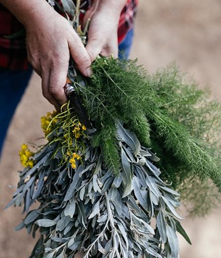 Get to know native ingredients at Carriageworks Night Market
