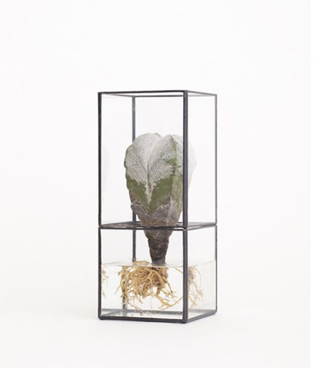 **Terra Hydro terrarium** This terrarium-like vessel for flowers, cuttings or indoor plants is not your average vase. The minimalist design lets your living friend steal the limelight, which is perfect for the wallflowers among us. Can we have two, please?_[mrkitly.com.au](https://mrkitly.com.au/), $280._