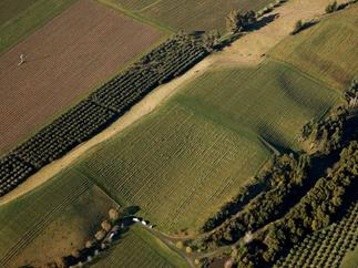Marlborough vineyards.