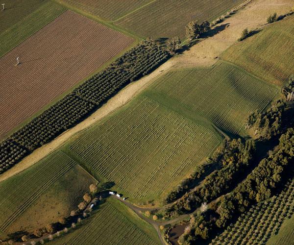 Marlborough vineyards.