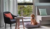 Three of the best dog-friendly hotels in Australia