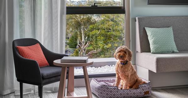 The best dog-friendly hotels in Australia | Gourmet Traveller